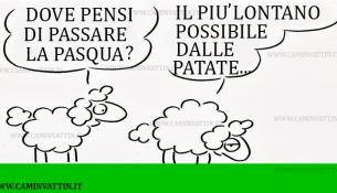 pecorelle pasquali - agnello con patate al forno - immagini e vignette divertenti