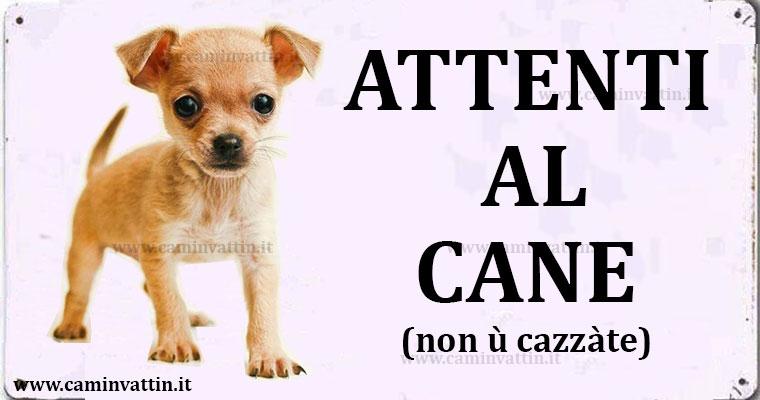 O Chihuahua Musica Attenti al cane (non &...