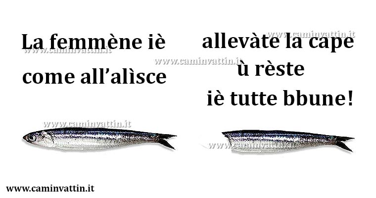 alice pesce