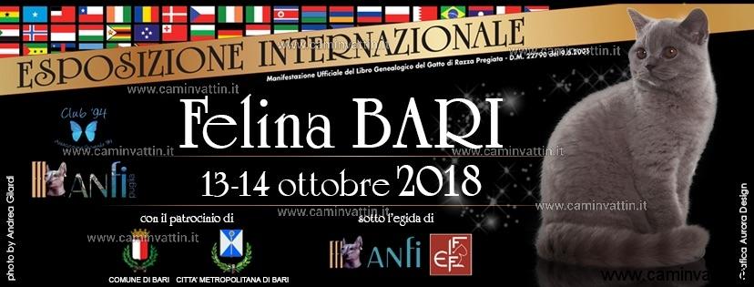 felina bari 2018 esposizione internazionale gatti