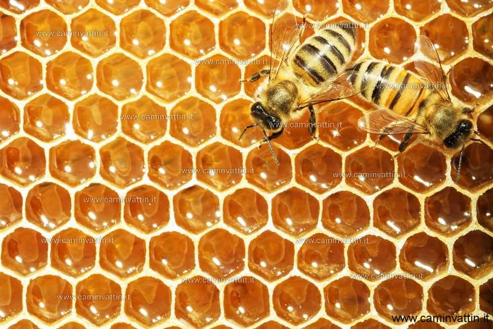 un viaggio nel mondo delle api