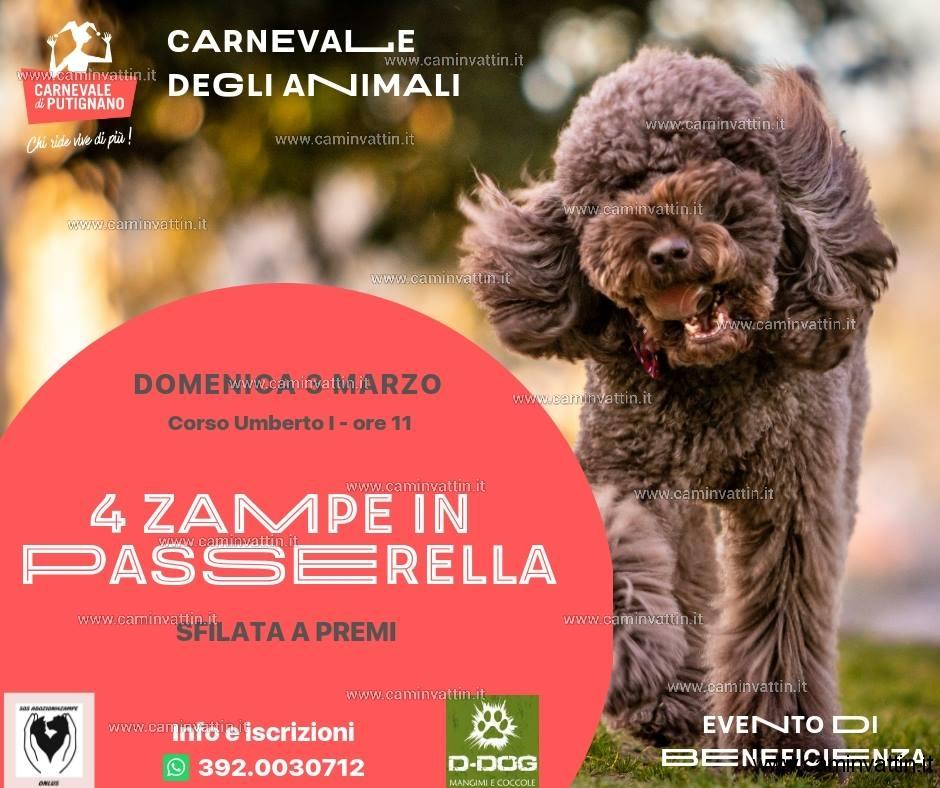 4 Zampe in Passerella sfilata a premi al Carnevale di Putignano
