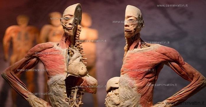 bodies exhibition bari mostra di veri corpi umani