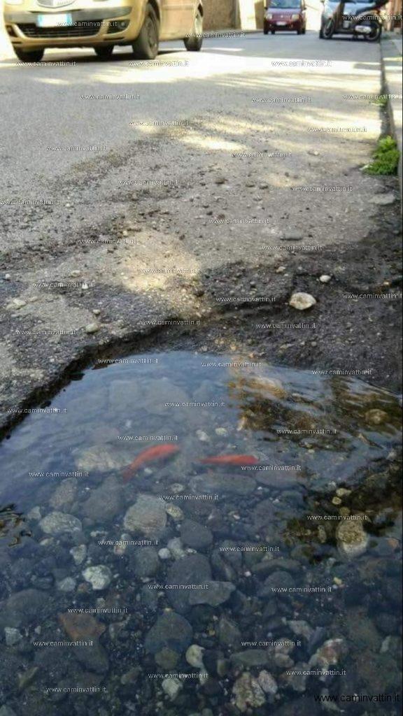 Pesciolini rossi nelle buche stradali della città