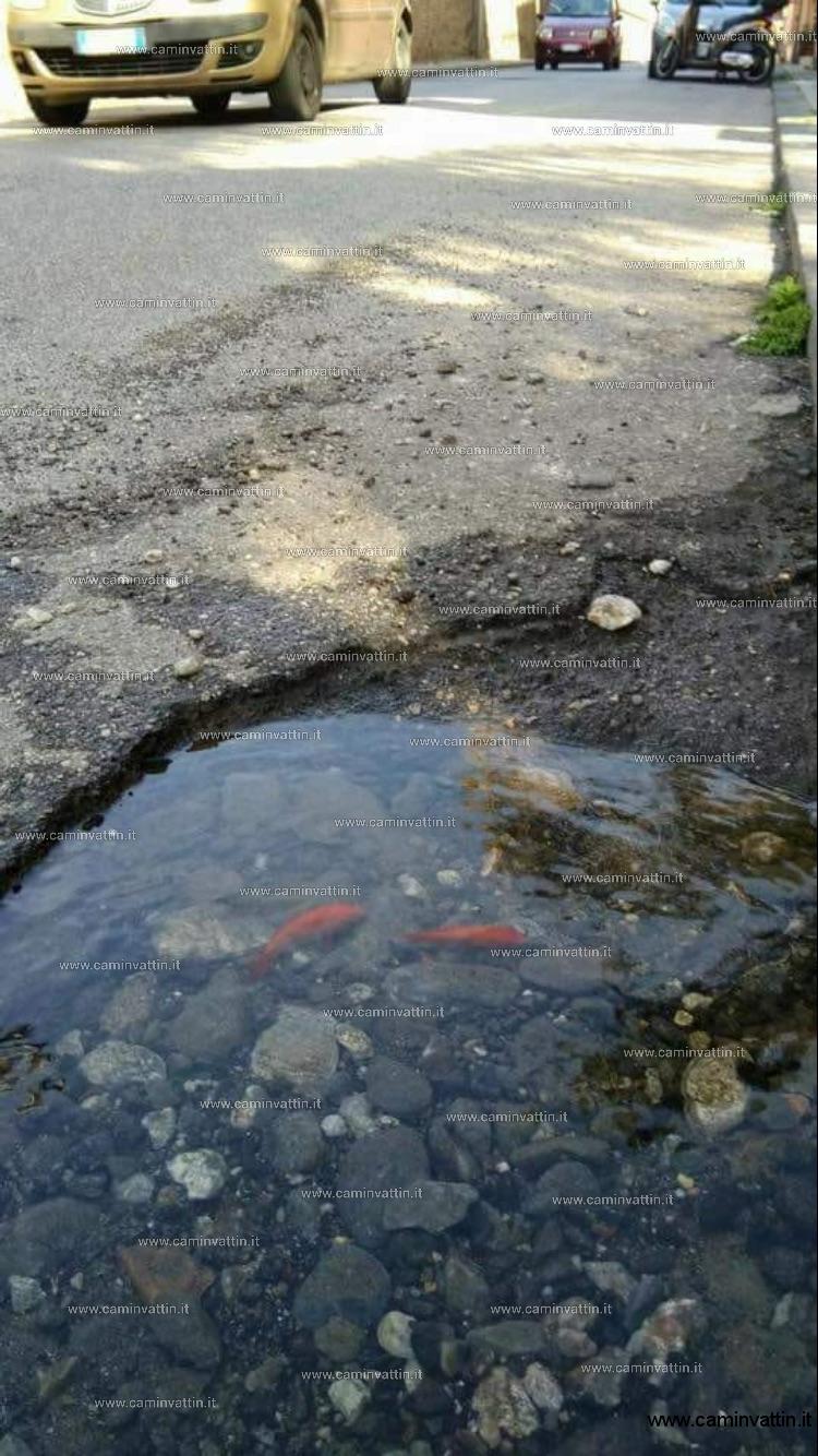 pesci nelle buche stradali