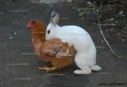 ecco come nascono le uova di pasqua