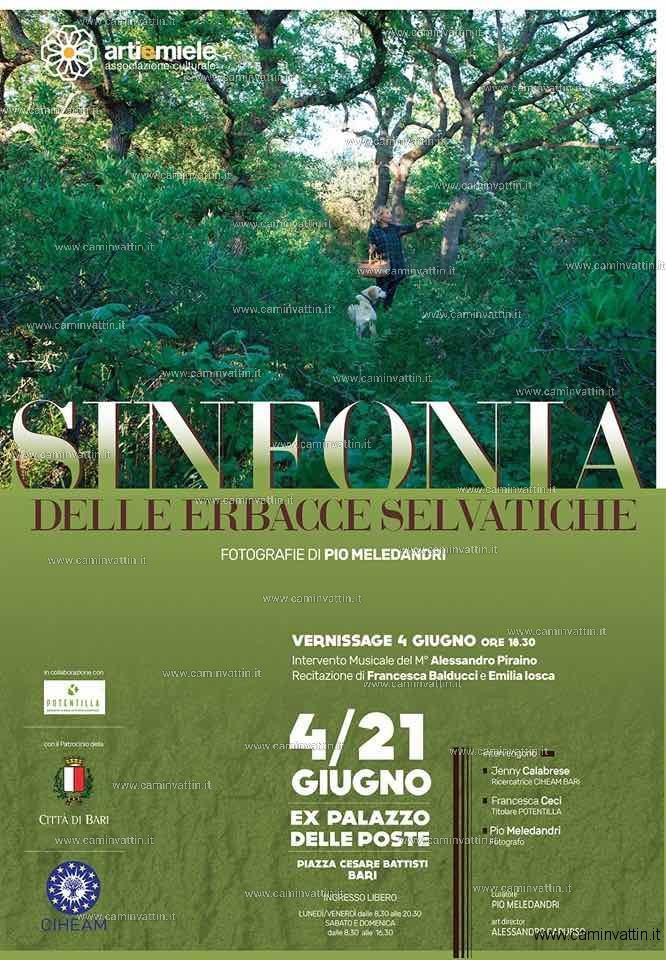 SINFONIA DELLE ERBACCE SELVATICHE Pio Meledandri