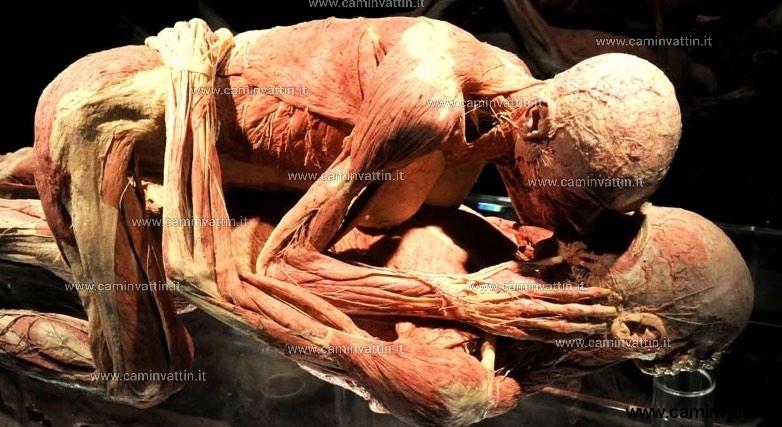 mostra veri corpi umani barletta